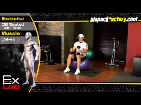 Seated Calf Raise : Calf Exercises