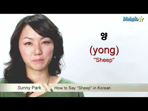 "How to Say ""Sheep"" in Korean"