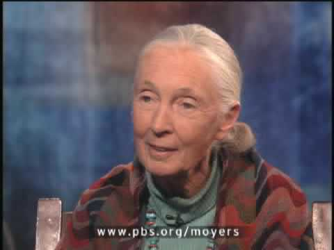 BILL MOYERS JOURNAL | Dr. Jane Goodall pt. 2 | PBS
