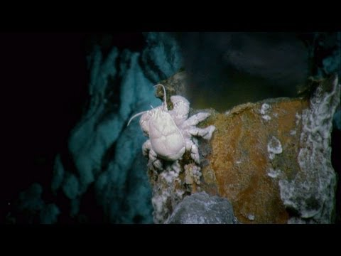 Alien Deep - The Hoff Crab