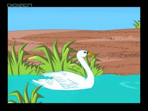 Swan can swim, but not fly (animated rhyme)