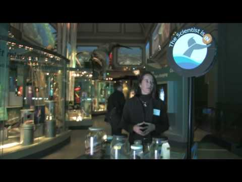 The Sant Ocean Hall, The Scientist Is In - Episode 1 at the National Museum of Natural History