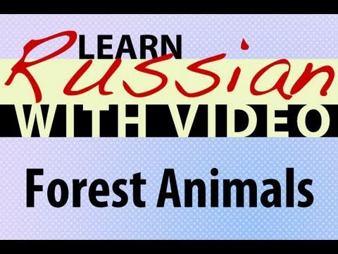 Learn Russian with Video - Forest Animals
