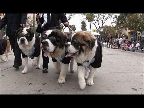 The Big Dog Parade