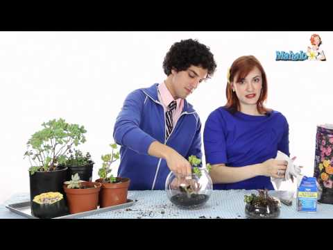 Budget Wedding Tips - How to Make a Terrarium to Use as a Centerpiece