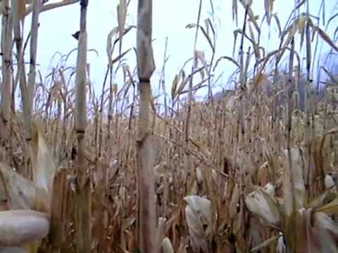Hiking through a cornfield:  Geographic considerations