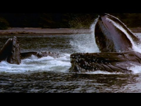 World's Deadliest - Giant Jaws of Death