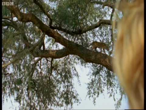 Zimbabwe safari guides in training - Wild & Dangerous - BBC