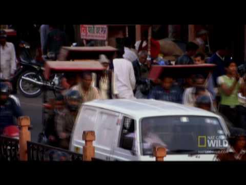 Rickshaw Raid