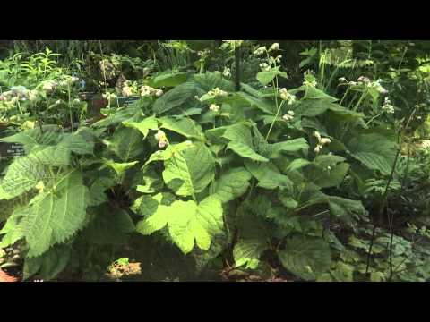 Plant Talk with Kristin — Plants for Shade