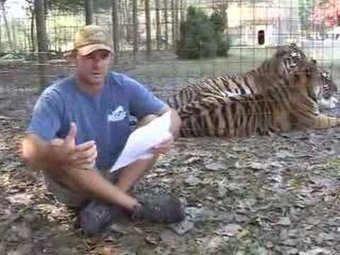 TIGER SHOT and KILLED! - Big Cat TV