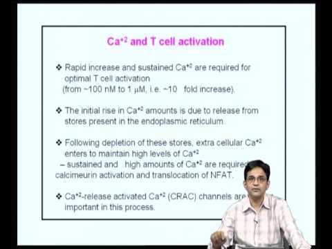 Mod-13 Lec-26 T cell Activation