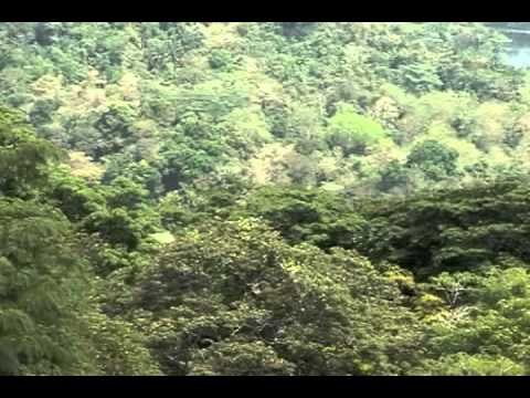Saving the Howler Monkeys of Panama: Primate Conservation