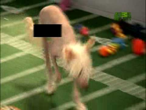 Puppy Bowl Classic: Streaker!