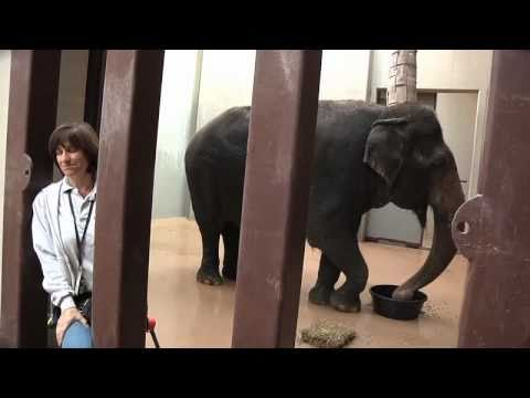 Meet the Elephants of the National Zoo
