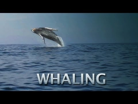Countdown To Commercial Whaling?