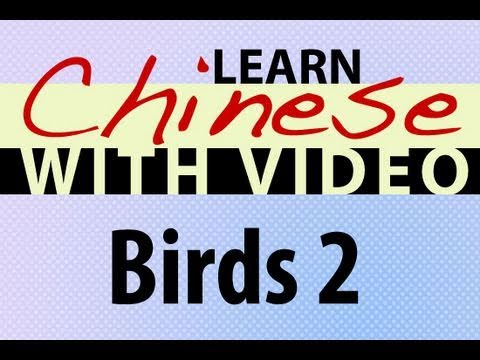 Learn Chinese with Video - Birds 2