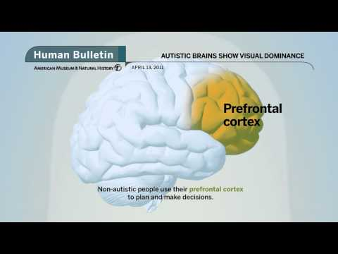Science Bulletins: Autistic Brains Show Visual Dominance