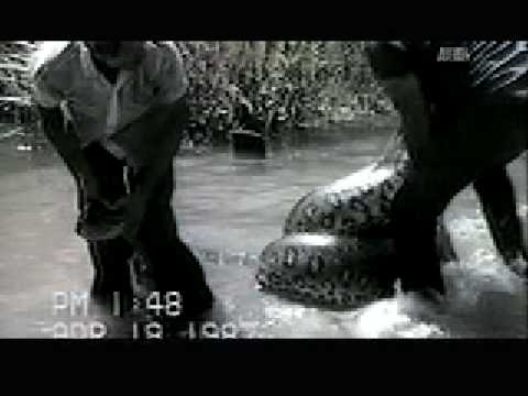 WTF: Anaconda Attacks Dog