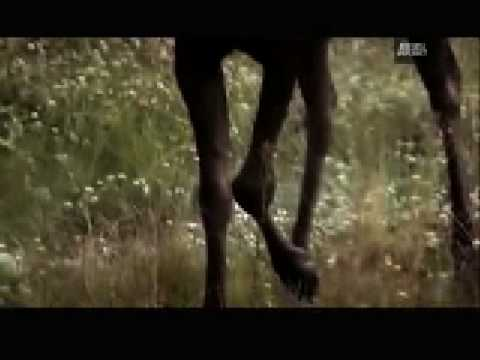 WTF! - Grizzly Bear Attacks