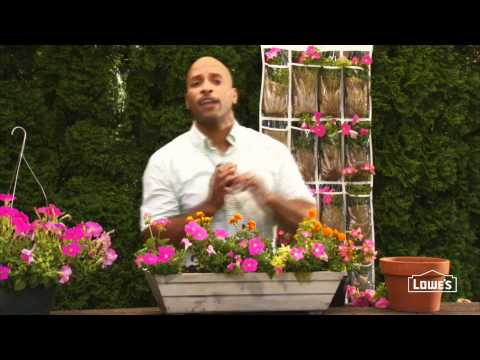 How to Add Quick Color with Annuals