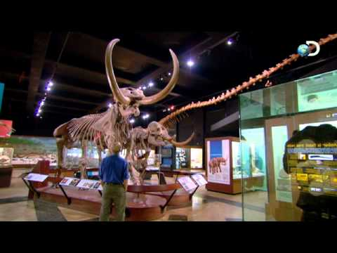 Mammoth Extinction | Woolly Mammoth: Secrets From the Ice