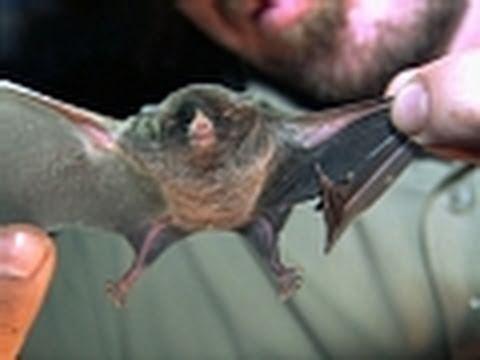 Python Hunters - Bat Capture