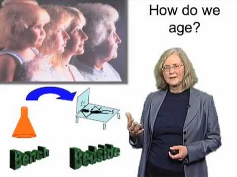 Elizabeth Blackburn (UCSF) iBio 3: Stress, Telomeres and Telomerase in Humans
