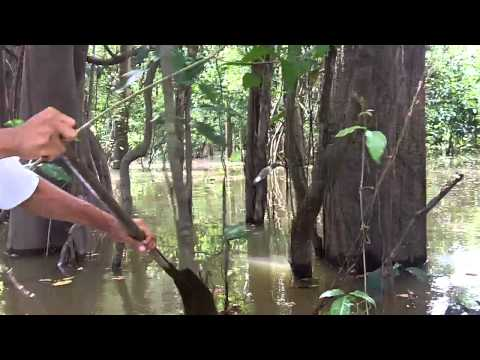 Bushwacking a boat through the Amazon Rainforest