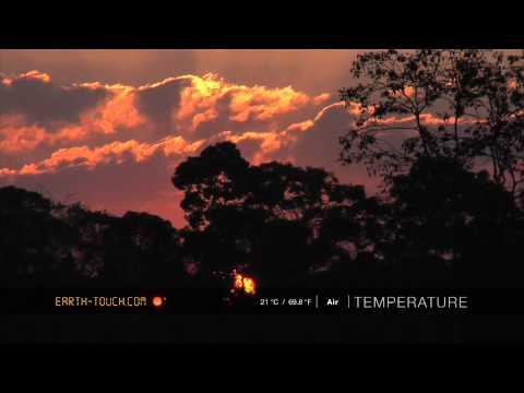 Animals call at sunset