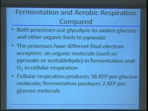 Saylor BIO101a: Cellular energy production and anaerobic processes II