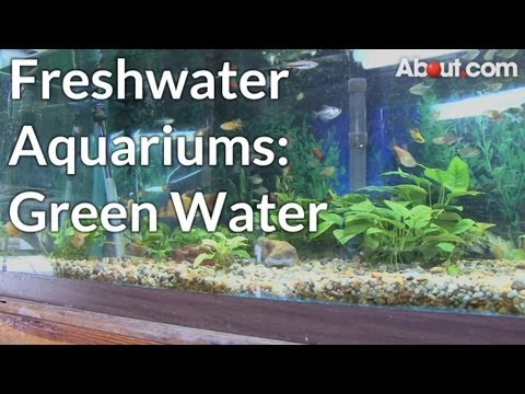 Why Do Fresh Water Aquariums Become Green?