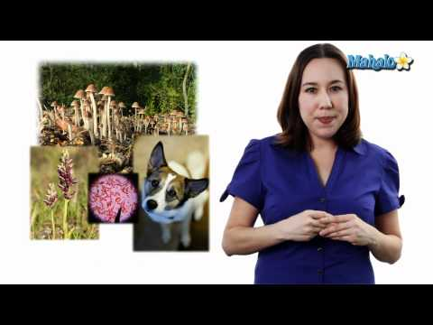 Learn Biology: Ecosystem Definition and Biotic Factors vs. Abiotic Factors