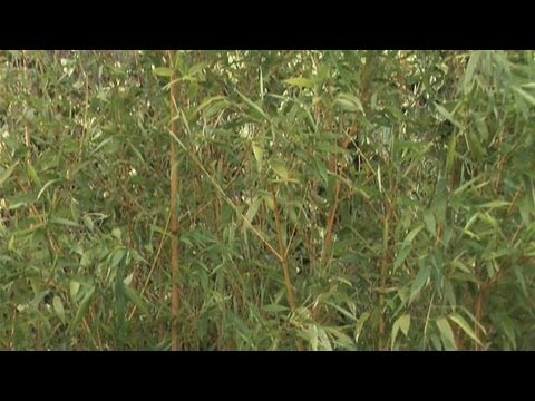 How To Take Care Of Bamboo