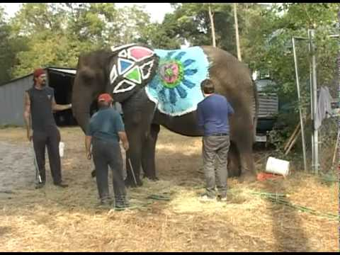 Pediatric Brain Cancer Patient Realizes His Dream To Paint An Elephant