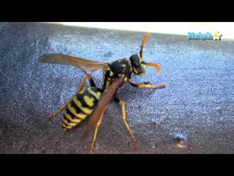 How to Kill Wasps