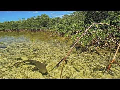 Swimming With Sharks: Juliet Eilperin