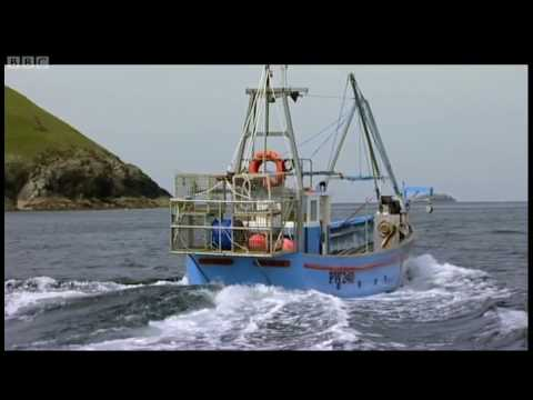 A fisherman's shark tale - Sharks: Great Whites in Britain? - BBC