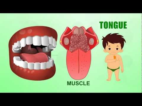 Learn about Human Body Parts For Kids - TONGUE