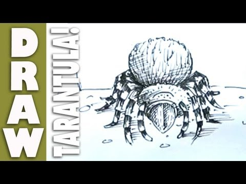 How to draw a Tarantula!