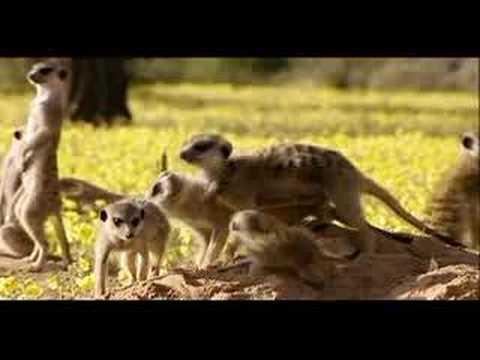 Meerkat Manor Movie - The Story Begins - PREMIERS 5/25!!!