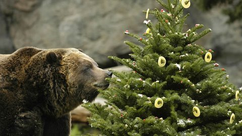 Happy Holidays from Woodland Park Zoo