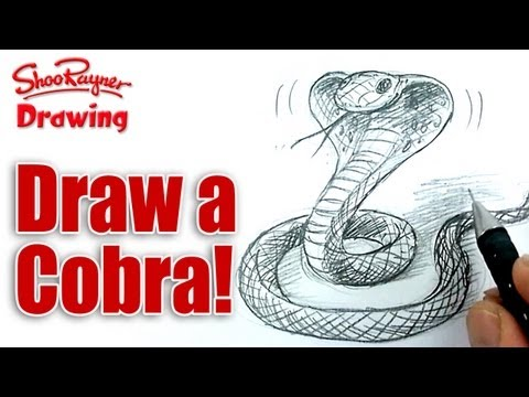 How to draw a Cobra snake  - Spoken Tutorial