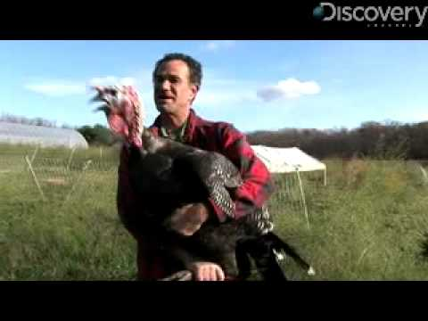Top 5 Favorite Turkey Facts