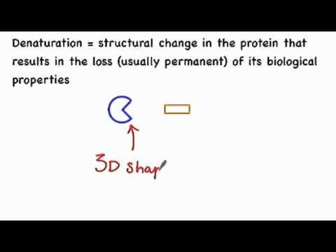 3.6.4 Define Denaturation