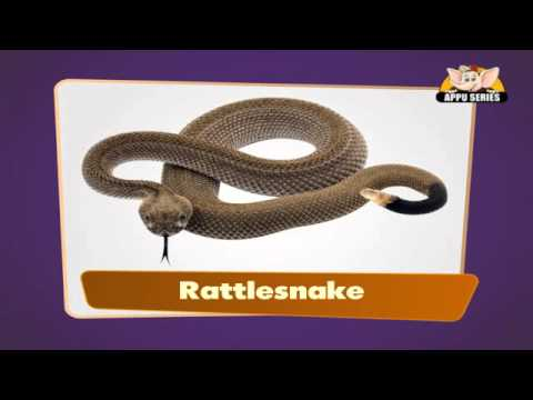 Flash cards for children - Reptiles