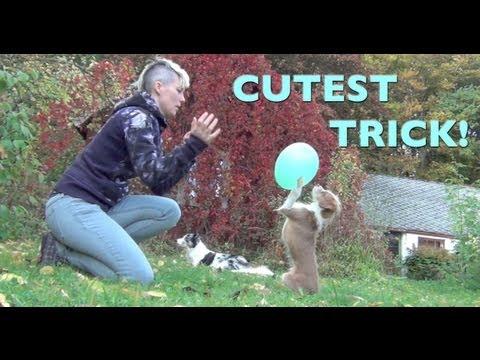 The cutest dog trick- amazing smartest dog tricks