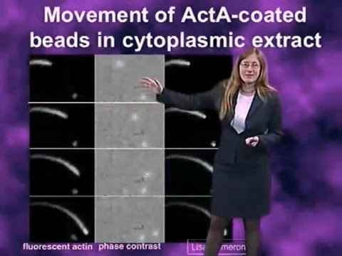 Julie Theriot (Stanford) Part 2: Force Generation by Actin Assembly
