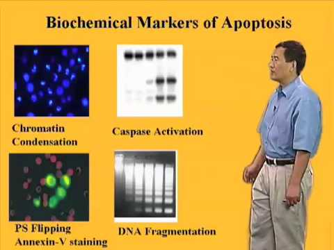 Xiaodong Wang (U Texas Southwestern) Part 1: Introduction to Apoptosis