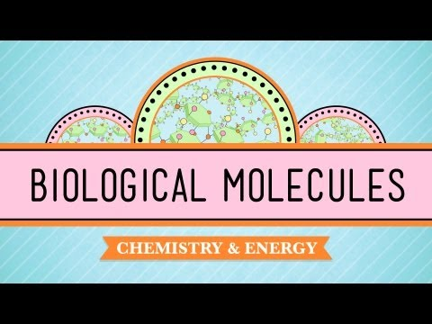 Biological Molecules - You Are What You Eat: Biology #3